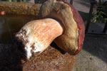 Ruta micológica en el parque de Las Batuecas