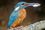 Ver aves junto al río Tormes