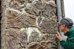 Ruta de las huellas fósiles