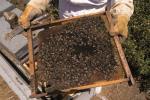 Feria de la miel en Aldeatejada