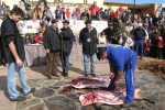Jornadas de la matanza típica de Guijuelo