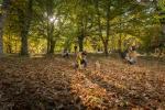 Disfruta de los 1.000 otoños de Salamanca en bandeja