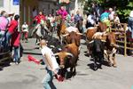 Fiestas del Toro en 'La Raya'