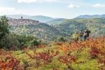 Actividades en la Ruta del Vino Sierra de Francia: El Cerro